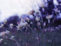 hope_by_novatheepic-d602fwm