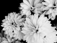 flowers_by_stephanitheartist