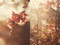 spring_by_aimeelikestotakepics